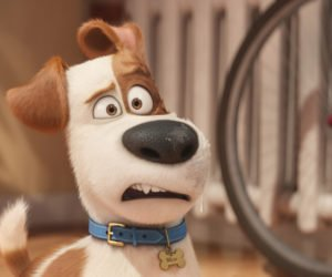 The Secret Life of Pets - Comme des bêtes